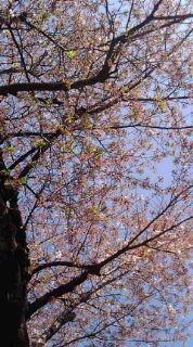 春のにほい