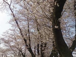 2013rokusho
